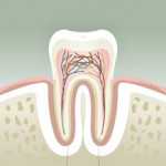 Root Canal Treatment in Montreal